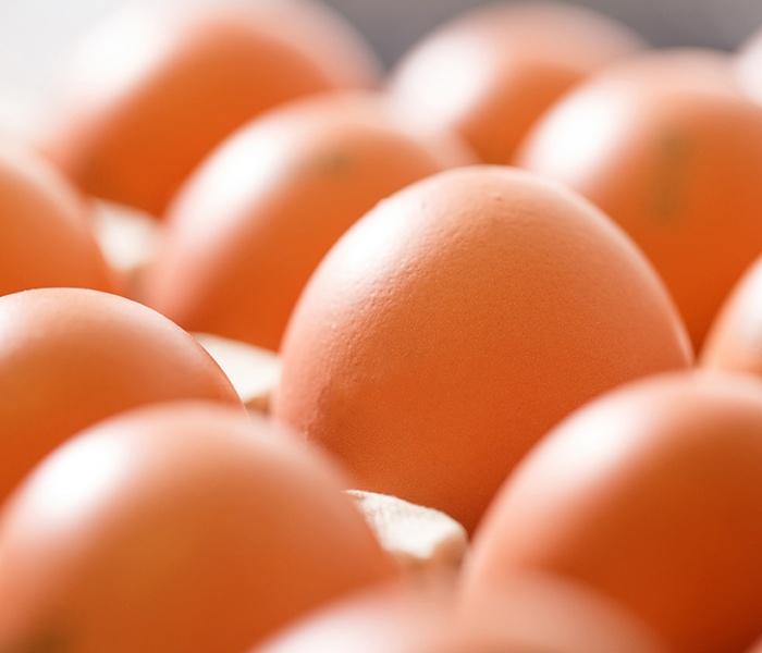 fase produzione uova, filiera italiana